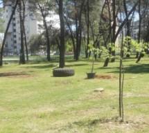 Sadni materijal za akciju pošumljavanja Tološke šume