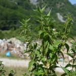 Zelenilo protiv deponije