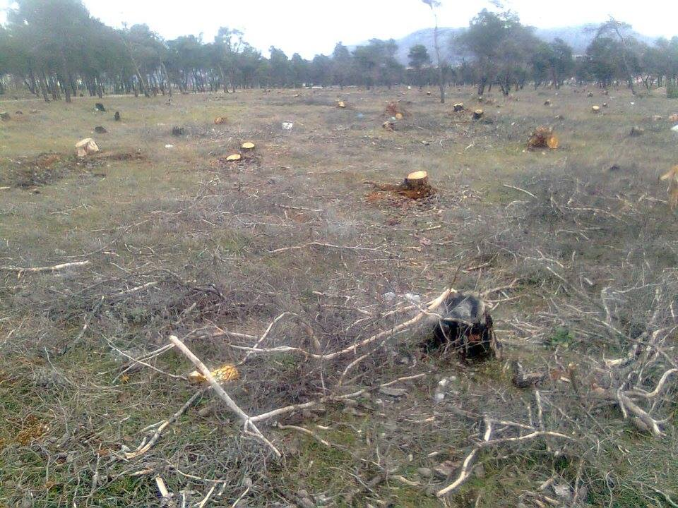 Neophodno izvršiti sanaciju i obnovu šuma - detalja sa Ćemovskog polja (Foto: Rajko Papović)