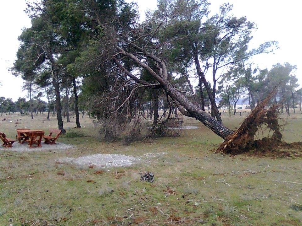 Šume stradaju usled antropogenioh i prirodnih pritisaka - Detalja sa Čemovkog polja (Foto: Rajko Papović)