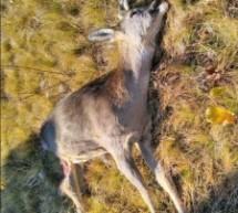Odgovor  na reagovanje lovačke organizacije iz Pljevalja