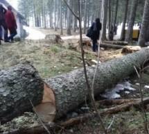"""Direktor Ozona smatra da je NP ,,Durmitor"""" izvrgao ruglu Međunarodni dan šuma"""