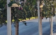 """U okviru regionalne akcije ,,,Drvo prijateljstva"""" novi drvored u Podgorici"""